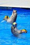Дельфинарий в Севастополе отзывы