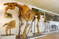 Палеонтологический музей в Киеве