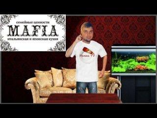 MAFIA - Сняли всё на видео!