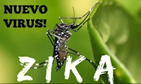 Вирус Зика