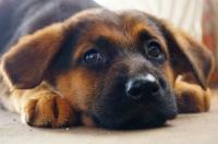 Корм для собак Біла Гора
