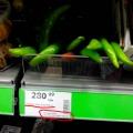 Отзыв о Novus: ценообразование и качество