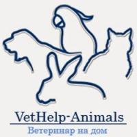 Ветеринарный кабинет Vethelp Animals