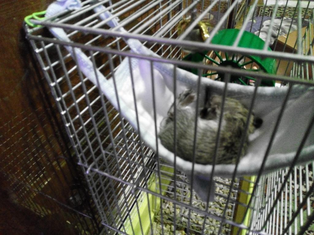 Корм для мелких грызунов Optima - Покупаем корм Оптима для белки Дегу