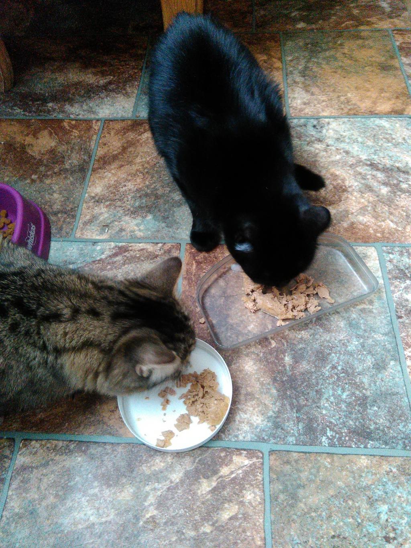 здоровая еда для кошек