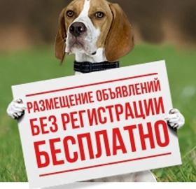 Охотничьи собаки и все для них