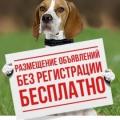 Охотничьи собаки и все для них отзывы