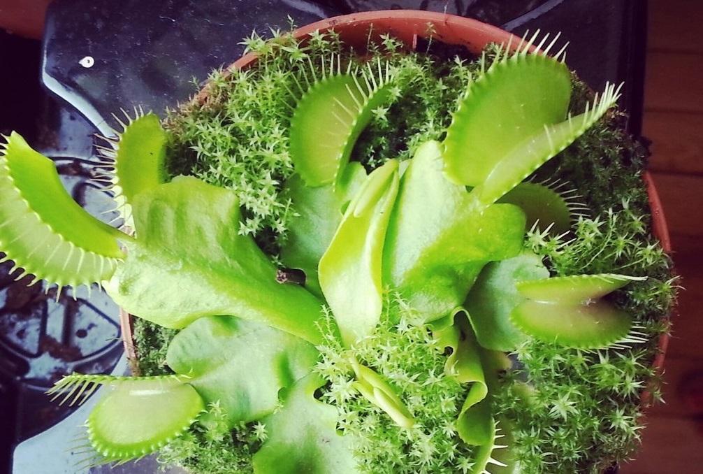 Интернет-магазин Хищных растений «Floret» - Как я получил своего хищника!