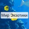 """Интернет-магазин """"Мир Экзотики"""" отзывы"""