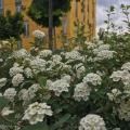 Отзыв о Комфорт Таун: Весна в КТ