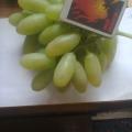 Отзыв о Интернет-магазин саженцев LeafLand.com.ua: Первые грозди