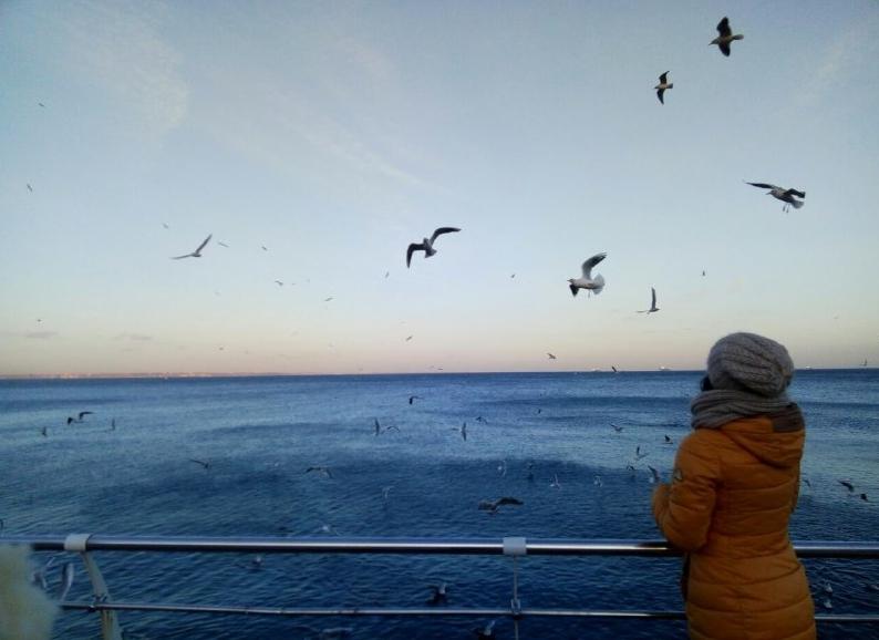 Дельфинарий Немо - Про то, что вокруг