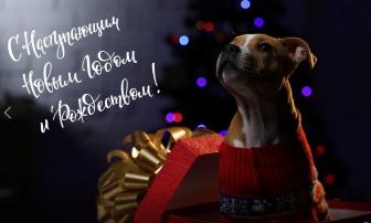 Новорічні свята: графік роботи відділень modnaKasta