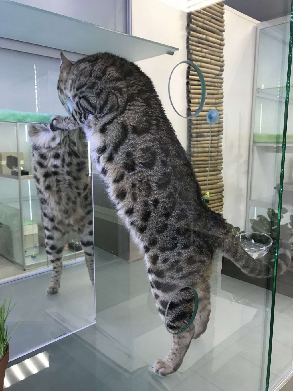 Гостиница для кошек Мир Мяу
