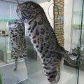 Гостиница для кошек Мир Мяу отзывы
