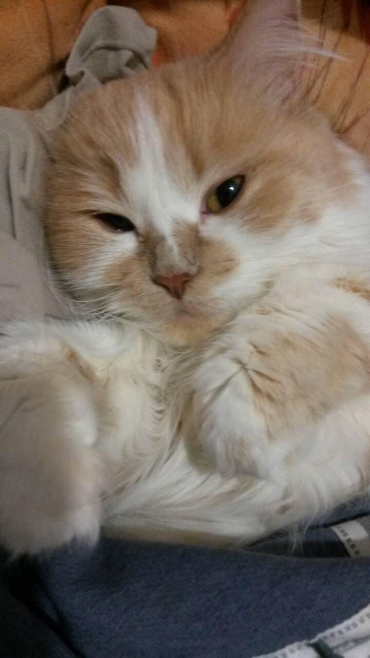 Ветеринарная клиника ВетМакс - клиника ВЕТМАКС - рекомендую!!!