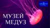 Музей медуз отзывы