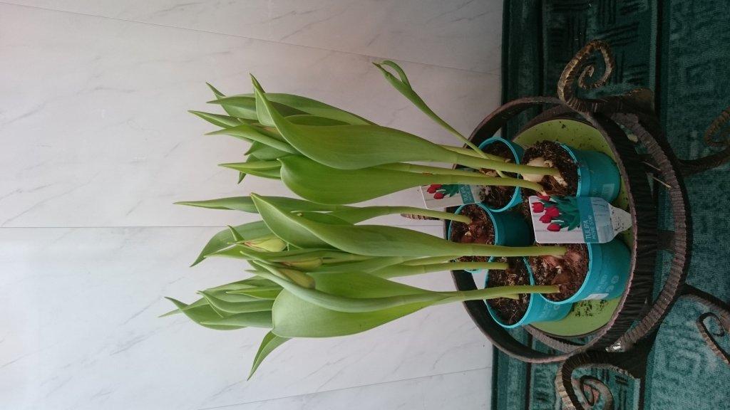 Интернет магазин цветов Флориум - Створи свою весну взимку!!!