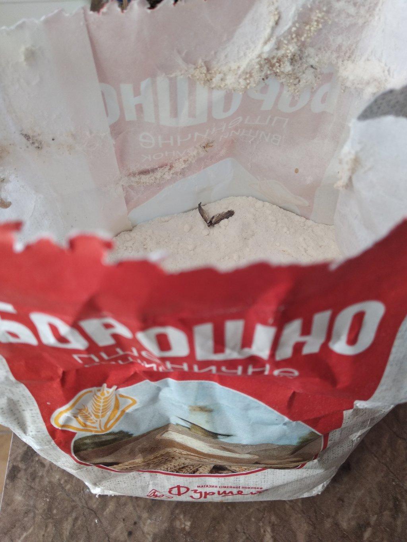 Фуршет Нетешин - Насекомые в продуктах