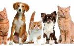 Передержка собак Animalias отзывы
